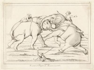 Two Elephants Fighting with Men on Their Backs- Lemaitre-Stretched Canvas Print