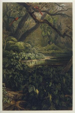Xanthosoma and Other Exotic Flora and Birds in the Brazilian Jungle-J^ Selleny-Stretched Canvas Print