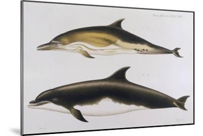 Two Varieties of Dolphin: Delphinus Delphis (Top) Delphinus Tursio-J. Smit-Mounted Giclee Print
