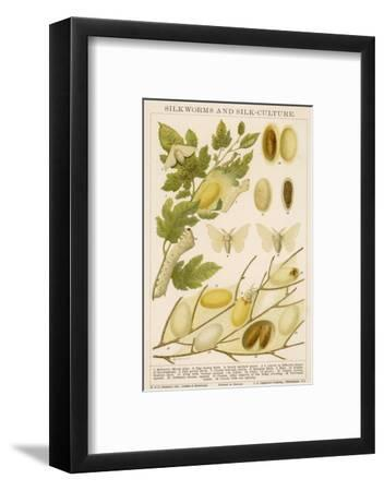 The Life Cycle of a Silk Worm and Silk Culture-A. Reichert-Framed Giclee Print