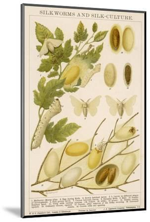 The Life Cycle of a Silk Worm and Silk Culture-A. Reichert-Mounted Giclee Print