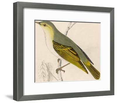 Wood Warbler-Reverend Francis O^ Morris-Framed Giclee Print