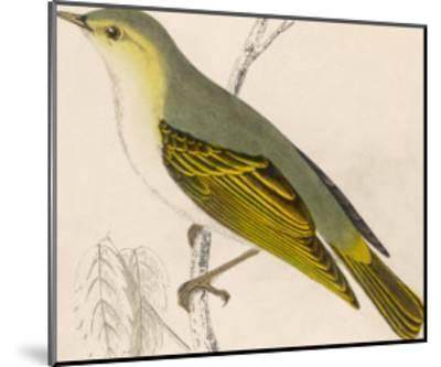 Wood Warbler-Reverend Francis O^ Morris-Mounted Giclee Print