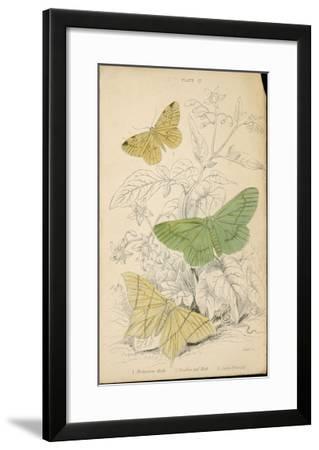 Brimstone Moth Swallowtail Moth Large Emerald- Lizars-Framed Giclee Print