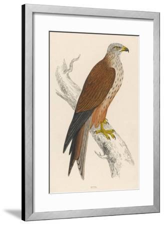 Red Kite-Reverend Francis O^ Morris-Framed Giclee Print