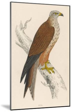 Red Kite-Reverend Francis O^ Morris-Mounted Giclee Print