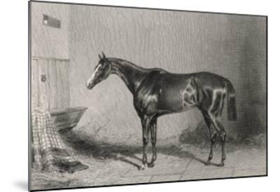 Portrait of the Racehorse Harkaway Who Won the 1838 Goodwood Cup in His Stable-W.b. Scott-Mounted Giclee Print