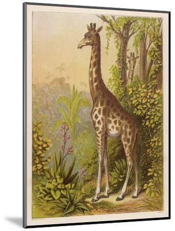 Standing Tall in the African Jungle--Mounted Giclee Print