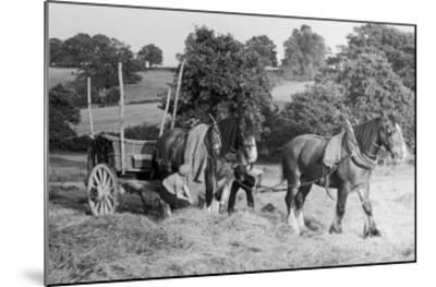 Harvesting in Kent with a Pair of Shire Horses--Mounted Giclee Print