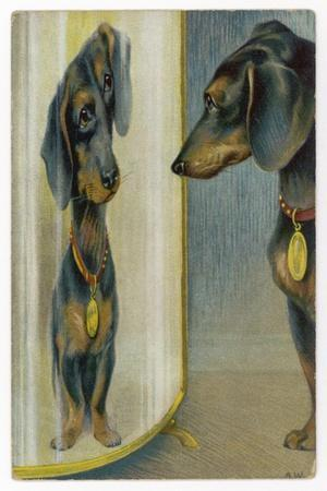 Dachshund Admires Its Reflection in a Distorting Mirror--Stretched Canvas Print