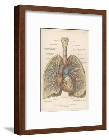 Detailed Diagram of the Lungs--Framed Giclee Print