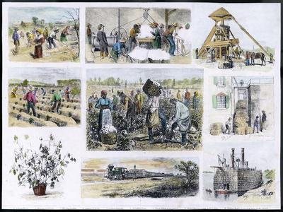 Various Stages of Cotton Processing--Stretched Canvas Print