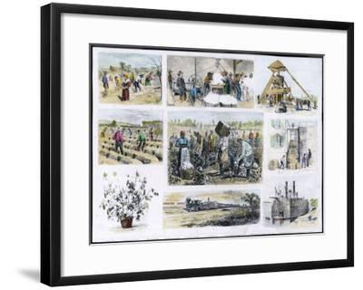 Various Stages of Cotton Processing--Framed Giclee Print