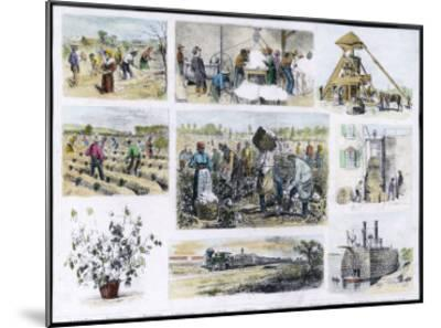 Various Stages of Cotton Processing--Mounted Giclee Print