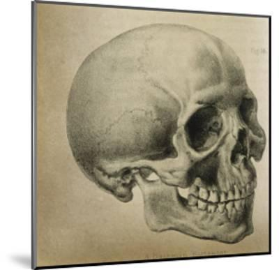 Illustration of the Skull of a Bushman of the Hottentot Tribe Africa--Mounted Giclee Print