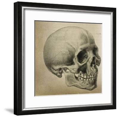 Illustration of the Skull of a Bushman of the Hottentot Tribe Africa--Framed Giclee Print