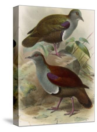 Ground Doves--Stretched Canvas Print