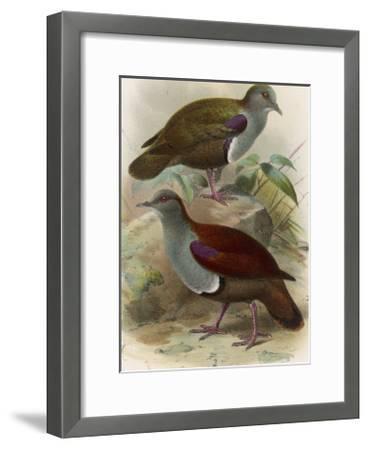 Ground Doves--Framed Giclee Print
