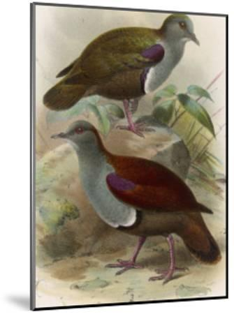 Ground Doves--Mounted Giclee Print