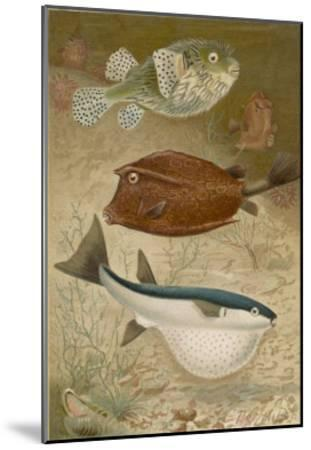 Globe Fish and Coffer Fish Swimming Together--Mounted Giclee Print