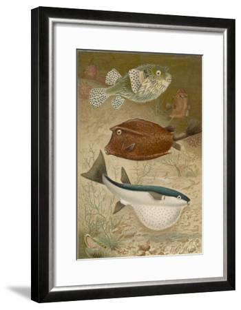Globe Fish and Coffer Fish Swimming Together--Framed Giclee Print