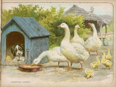 Geese and a Kenneled Dog--Stretched Canvas Print
