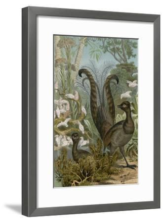 Lyre Bird--Framed Giclee Print