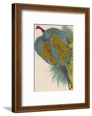 Argus Pheasant--Framed Giclee Print