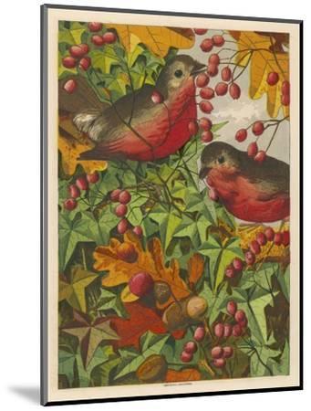 Two Robins Among Berries--Mounted Giclee Print