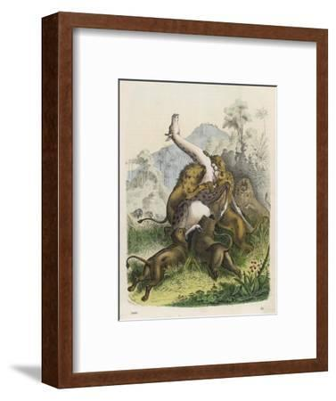 Giraffe Attacked by Six Lions--Framed Giclee Print