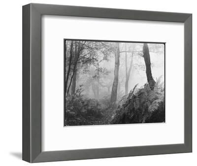 An Eerie Misty Wood with Ferns Near Esher Common Surrey England--Framed Giclee Print