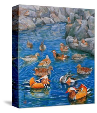 Mandarin Ducks-Komi Chen-Stretched Canvas Print