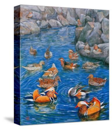 Mandarin Ducks-Komi Chen-Stretched Canvas Print