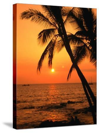A Couple in Silhouette, Enjoying a Romantic Sunset Beneath the Palm Trees in Kailua-Kona, Hawaii-Ann Cecil-Stretched Canvas Print