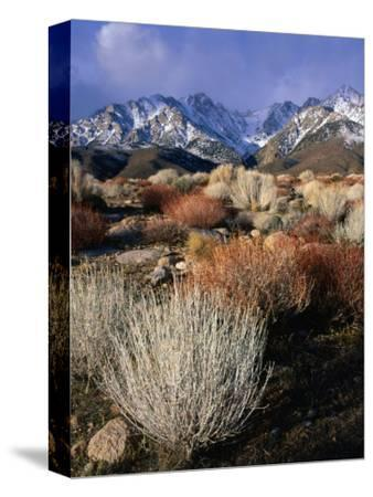 Mountains and Desert Flora in the Owens Valley, Inyo National Forest, California, USA-Wes Walker-Stretched Canvas Print