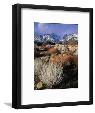 Mountains and Desert Flora in the Owens Valley, Inyo National Forest, California, USA-Wes Walker-Framed Photographic Print