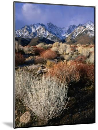 Mountains and Desert Flora in the Owens Valley, Inyo National Forest, California, USA-Wes Walker-Mounted Photographic Print