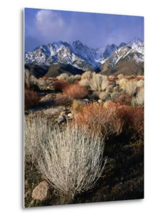 Mountains and Desert Flora in the Owens Valley, Inyo National Forest, California, USA-Wes Walker-Metal Print