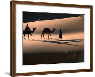 Camel Caravan Crossing Dunes, Erg Chebbi Desert, Morocco-John Elk III-Framed Photographic Print