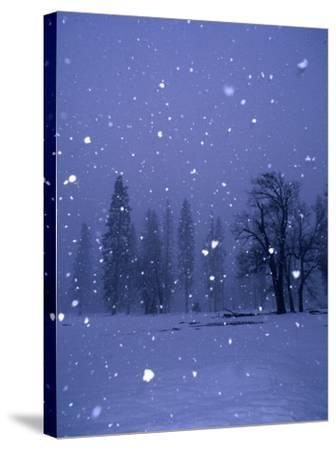 Falling Snow, Yosemite National Park, California, USA-Thomas Winz-Stretched Canvas Print