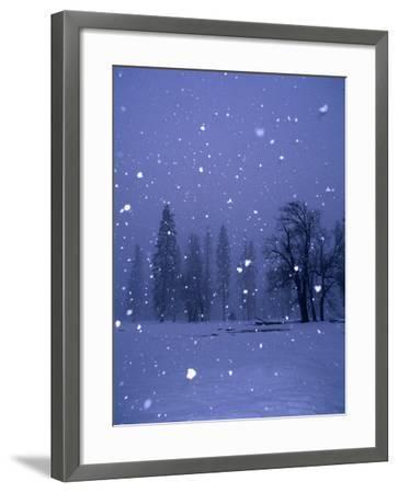 Falling Snow, Yosemite National Park, California, USA-Thomas Winz-Framed Photographic Print