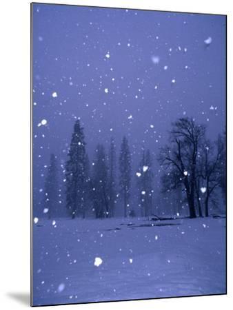 Falling Snow, Yosemite National Park, California, USA-Thomas Winz-Mounted Photographic Print