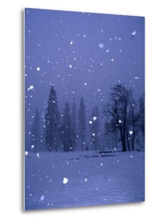 Falling Snow, Yosemite National Park, California, USA-Thomas Winz-Metal Print