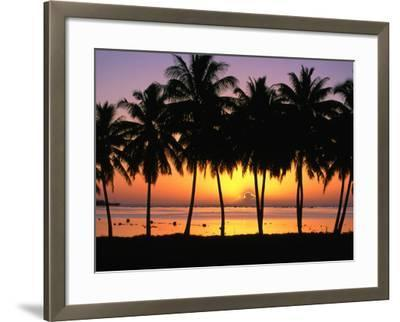 Palm Trees at Sunset, Cook Islands-Peter Hendrie-Framed Photographic Print