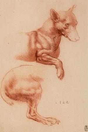 Study of a Pomeranian Dog, Drawing, Royal Library, Windsor-Leonardo da Vinci-Stretched Canvas Print