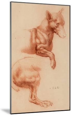 Study of a Pomeranian Dog, Drawing, Royal Library, Windsor-Leonardo da Vinci-Mounted Giclee Print