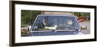 Two Dogs in a Pick-Up Truck, Main Street, Talkeetna, Alaska, USA--Framed Photographic Print