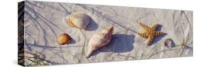 Starfish and Seashells on the Beach, Dauphin Island, Alabama, USA--Stretched Canvas Print