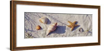 Starfish and Seashells on the Beach, Dauphin Island, Alabama, USA--Framed Photographic Print