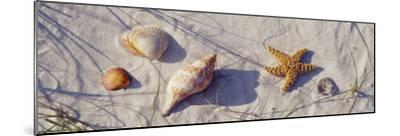 Starfish and Seashells on the Beach, Dauphin Island, Alabama, USA--Mounted Photographic Print